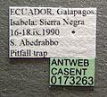 Pheidole flavens casent0173263 label 1.jpg