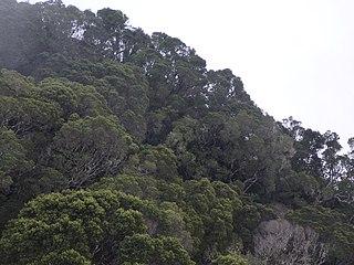 Cuban moist forests