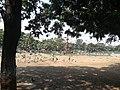 Pigeons 4.jpg
