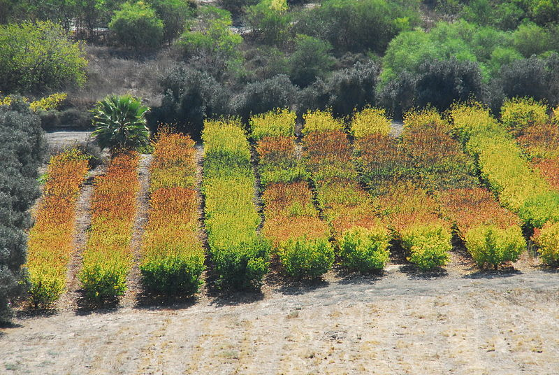 File:PikiWiki Israel 19716 Plants of Israel.JPG