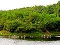 Pinckney Island National Wildlife Refuge (5958501066).jpg