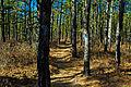 Pine Barrens 1.jpg