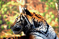 Pittsburgh Zoo (4509848232).jpg