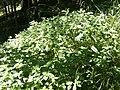 Plant.7353.jpg