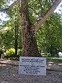 Platan Mihaila Obrenovića u parku Bukovičke Banje u Aranđelovcu 1.jpg