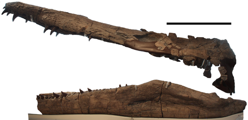 Pliosaurus kevani