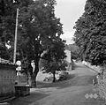 Pod lipo v Mačkovljah (vaški trg) 1967.jpg