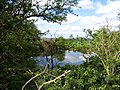 Pond - geograph.org.uk - 404680.jpg