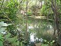 Pond between trees.jpg