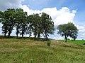 Pope Farm Conservancy - panoramio - Corey Coyle (20).jpg