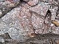Porphyritic granodiorite (Mission Stock, Archean; Michipicoten River Bridge South roadcut, south of Wawa, Ontario, Canada) 1 (47922735241).jpg