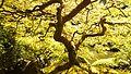 Portland Japanese Garden (2013-09-10 14.26.44 by Jon Roberts).jpg