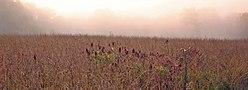 Prairie in Effigy Mounds National Monument, Iowa (2005)