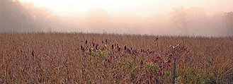 Midwestern United States - Prairie in Effigy Mounds National Monument, Iowa