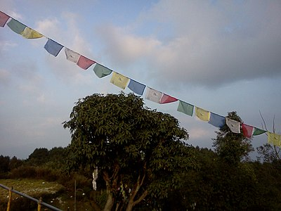 Prayer Flag and Rhododendron tree Nagarkot Nepal.jpg