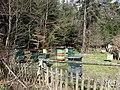 Pszczoły już się budzą... - panoramio.jpg