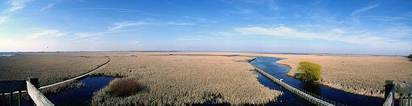 Marsh in Point Pelee, Ontario, Canada
