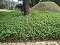 Putrajaya's Botanical Garden 32.jpg