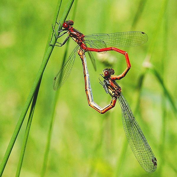 蜻蜓和豆娘  (高清) - 海阔山遥 - .