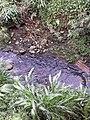 Quebrada La Petrolera.jpg