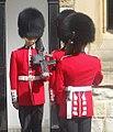 Queen's Guard (5987368622).jpg