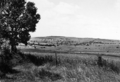 Queensland State Archives 2159 Farm lands Coolabunia district 1945.png