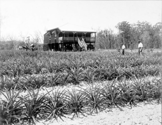 Beerburrum, Queensland - Soldiers farm, Beerburrum, 1918