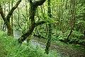 Río Lambre, Miño.jpg