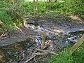 RK 1805 P1600465 Naturschutzgebiet Höltigbaum, Zusammenfluss Braaker Au und Wandse.jpg