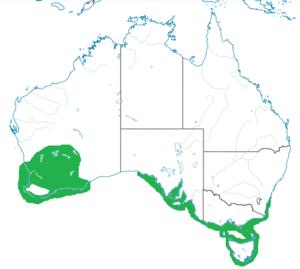 Hooded dotterel - Habitat range of Thinornis rubricollis