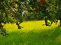 Red Apples - panoramio.jpg