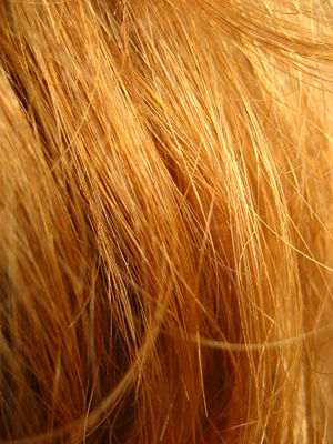 Red hair in close-up (Image via Wikipedia)