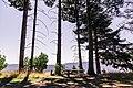 Redwood Picnic Spot, California (40521964471).jpg