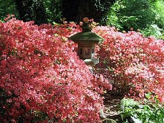 file rhododendronpark bremen wikimedia commons. Black Bedroom Furniture Sets. Home Design Ideas