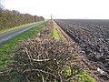 Road to Faxfleet - geograph.org.uk - 115297.jpg