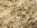 Roccia sedimentaria organogena calcare fossilifero.jpg
