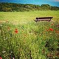 Rock-cornwall-england-tobefree-20150715-192627.jpg