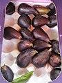 Rosales - Ficus carica - 17.jpg