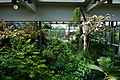 Rosine Smith Sammons Butterfly House & Insectarium August 2016 01.jpg