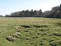 Rough grazing and woodland, Acomb Fell - geograph.org.uk - 1289414.jpg