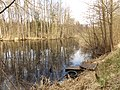 Rozlewisko koło wsi Słupy - panoramio.jpg