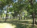 Runnymede Park.JPG