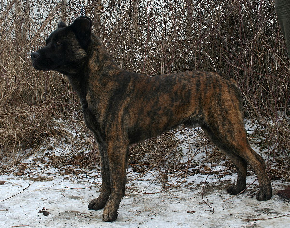 Image Result For Guard Dogs That