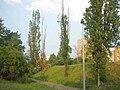 Sídliště Zahradní Město východ, odumírající topoly (01).jpg
