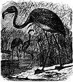 SFR b+w - flamingo.jpg
