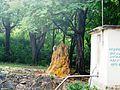 SRI JAYAVEERA ANJANEYAR TEMPLE, NH7, THOPPUR - panoramio (5).jpg