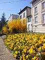 Saint-Chamond (Loire), entre la gare et la rue du Pont-Fournas, 7 avril 2015.jpg
