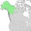 Salix alaxensis range map 2.png