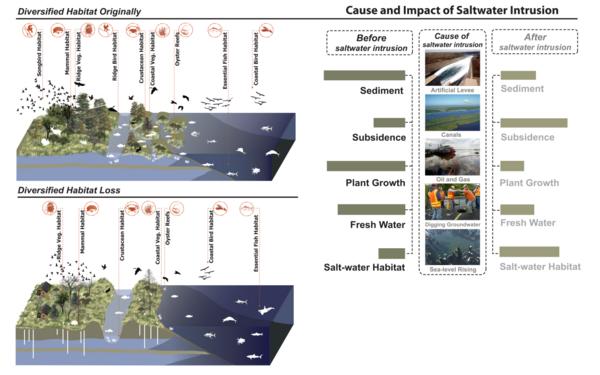 Saltwater Intrusion Wikipedia - Saltwater intrusion map us