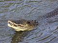 Saltie-eats-fish-LKY-4.jpg
